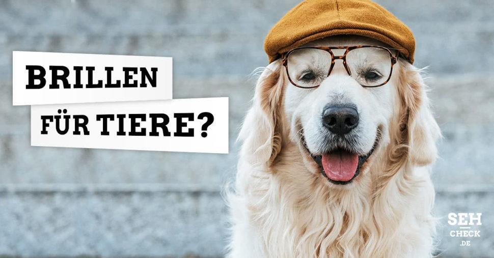Brillen für Tiere – Brillen für Hunde