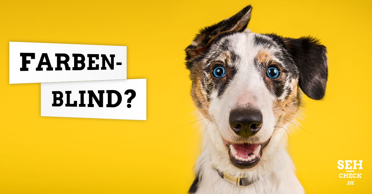Hunde farbenblind