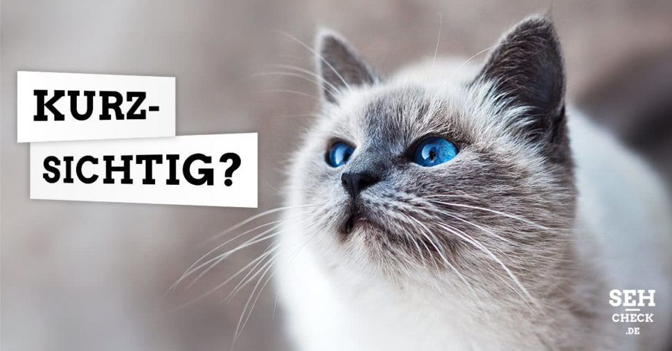 Kurzsichtig Katze