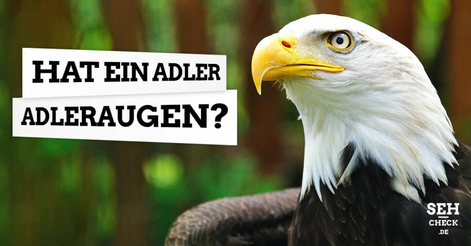 Adleraugen